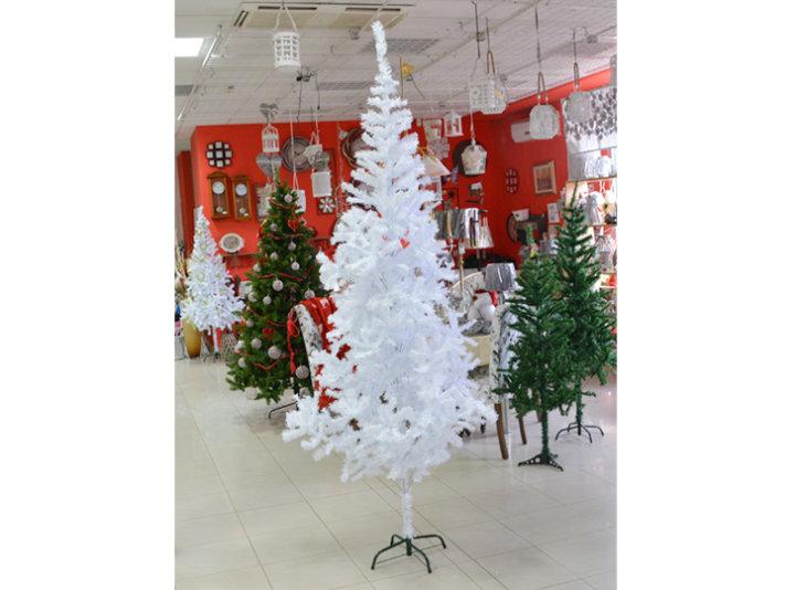 bijelo drvce